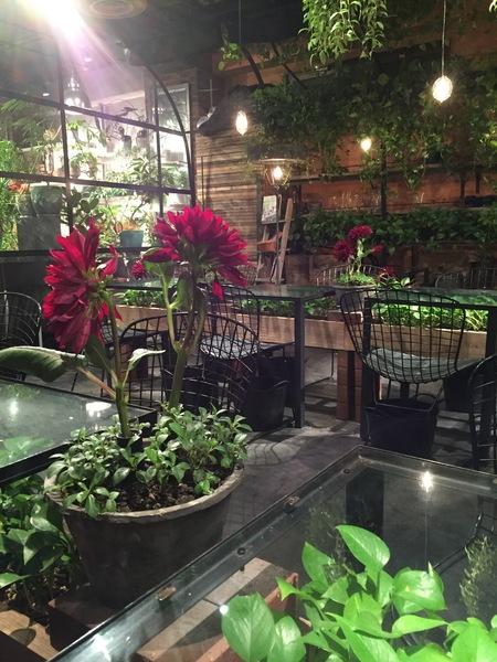 植物と暮らす2